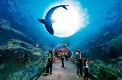 Aquarium image shark
